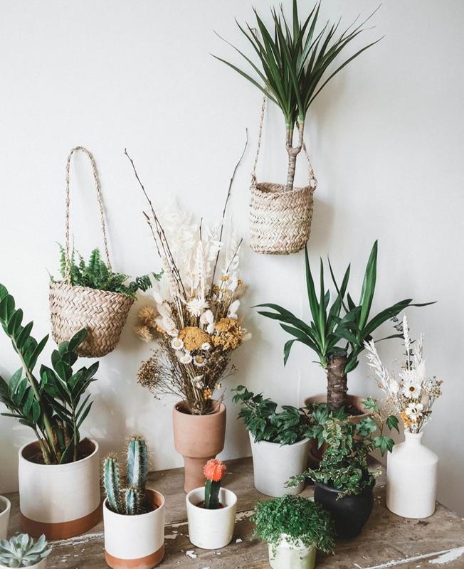plantas del jardin efimero